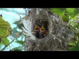 קן לציפור