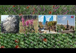 זמן חיפה 249 – יולי 2020
