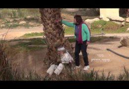 בונוס-על הסרט אישה במדבר