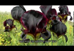 ארץ ישראל יכולה להיות יפה